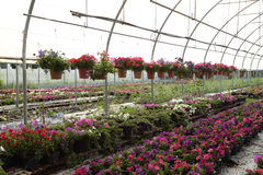 Flower farm nursery Stock Images