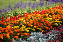 Flower. Farm planted a variety of flowers, herbs, and woody, the trees, shrubs, open from spring to autumn, and is really a sea of flowers, flower world Stock Photo