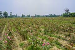 Flower farmlands in blossom on sunny summer day Stock Image