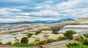 Flower farms in greenhouse garden in the city of Dalat, Vietnam Royalty Free Stock Image