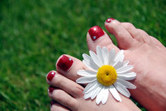 Flower and feet. Daisy flower on feet on green grass royalty free stock photos