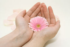 Flower in female hands Royalty Free Stock Images