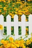 Flower and fence Stock Image