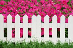 Flower and fence Stock Photos