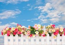 Flower fence Stock Photos