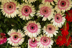 Flower festival in funchal Stock Photography