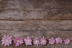 Flower festive frame of pink mallow flowers. On a wooden table Royalty Free Stock Images