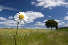 Flower in field Stock Photo