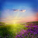 Flower field. Beautiful sunset  in the flower field Royalty Free Stock Photography