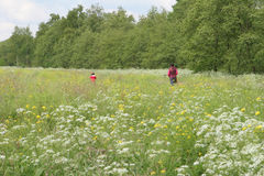 Flower field. Walking through a flower field royalty free stock image