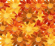 Flower field. Flower texture - llustration, floral background, red, yellow, brown colors Stock Photo