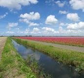 Flower field Stock Image