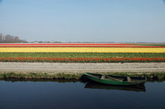 Flower field. Rowboat in front of a flower field in Holland Stock Photos
