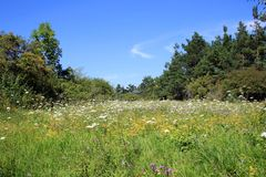 Flower Field. This image shows a meadow from wildflower royalty free stock images