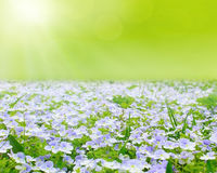 Flower field with abstract sky Stock Image