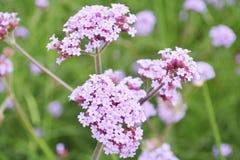 Flower field Royalty Free Stock Photo