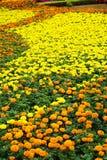 Flower field background Stock Photo