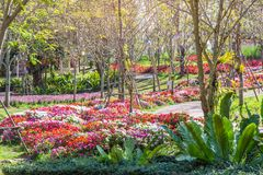 The Flower field beautiful in the gardening of background,Garden spring season flowers royalty free stock photo