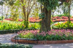 The Flower field beautiful in the gardening of background,Garden spring season flowers stock photo