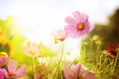 Flower field Royalty Free Stock Images