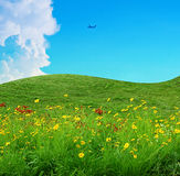 Flower field and blue sky Royalty Free Stock Images