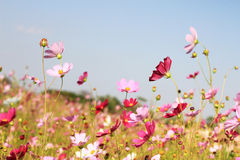 Flower field and blue sky Royalty Free Stock Photo