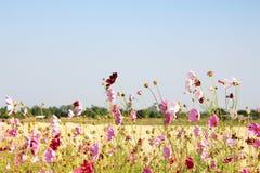 Flower field and blue sky Stock Photos