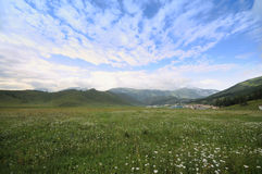 Flower field and blue sky with  mountain Royalty Free Stock Photo