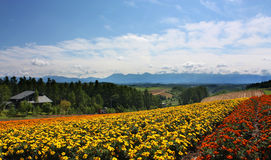 Flower field and blue sky. Photo was taken in Furano of hokkaido royalty free stock photos
