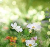 Flower field bokeh Royalty Free Stock Photo