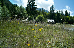 Flower field and cabin Royalty Free Stock Photography