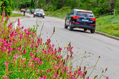 Flower field and car Stock Photography