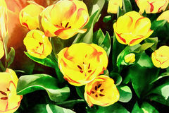 Flower field with colorful tulips. The works in the style of wat. Ercolor painting Stock Photo