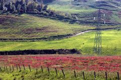Flower field in countryside. Scenic view of red flowers blooming in countryside field with electricity pylon and winding road. sicily stock photography