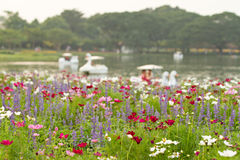 Flower field and defocused of lake background. Selective focus. stock photography