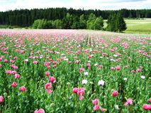 Flower, Field, Ecosystem, Meadow stock photo