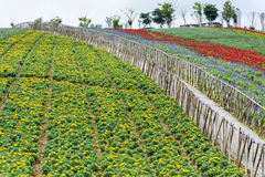 Flower Field with fence Stock Image