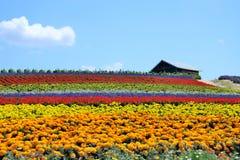 Flower field. At Kanno farm, Furano, Hokkaido, Japan Stock Photos