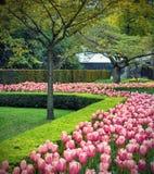 Flower field in Keukenhof Royalty Free Stock Image