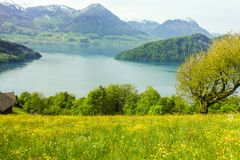 Flower field on the lake with mountain background.  royalty free stock photography