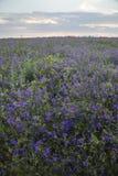Flower field. landscape with sunrise nature.  Stock Photos