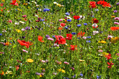 Flower field. In late summer day Stock Images