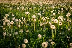 Flower, Field, Meadow, Ecosystem stock photos