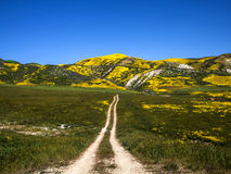 Flower field mountain during spring in California Stock Photo