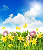 Flower field with narcissus, easter eggs in grass Stock Photos