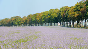 Flower field no.1 Royalty Free Stock Photo