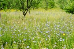 Flower field royalty free stock image