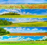Flower field panoramas Royalty Free Stock Photo