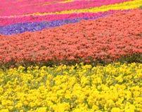 Flower field in park Stock Image