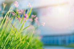 Flower field purple flora low angle view on sunny day Stock Images